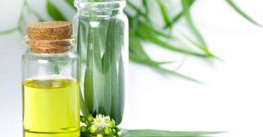 Как эффективно применять масло эвкалипта?