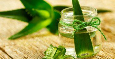 Алоэ: лечебные свойства и противопоказания, польза
