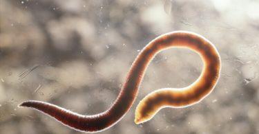 Как избавиться от гельминтов у взрослых?
