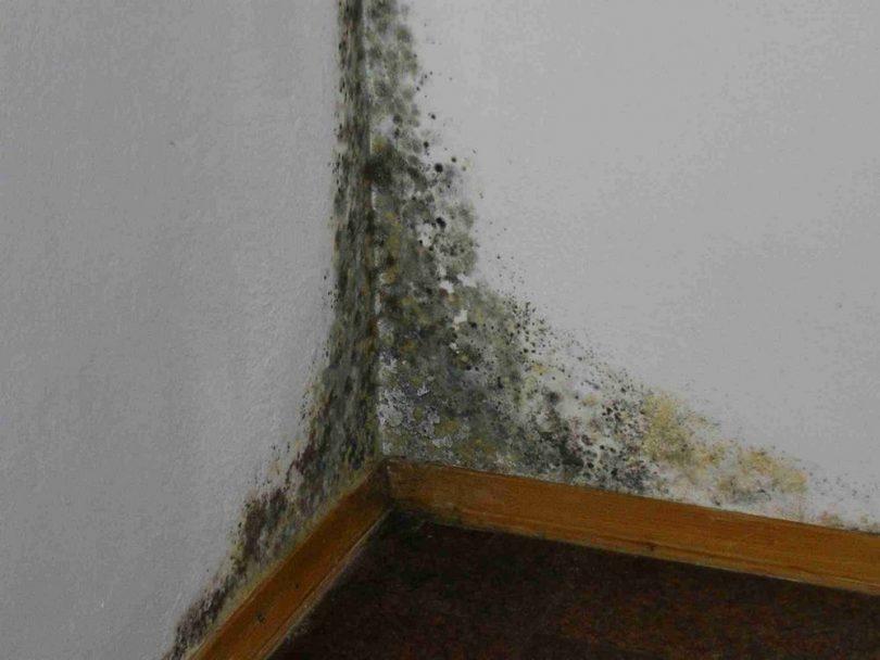 Чем опасен грибок на стенах для здоровья (в квартире)?