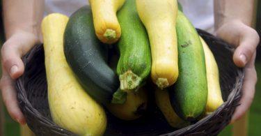 Цукини и кабачки: чем отличаются, что приготовить?
